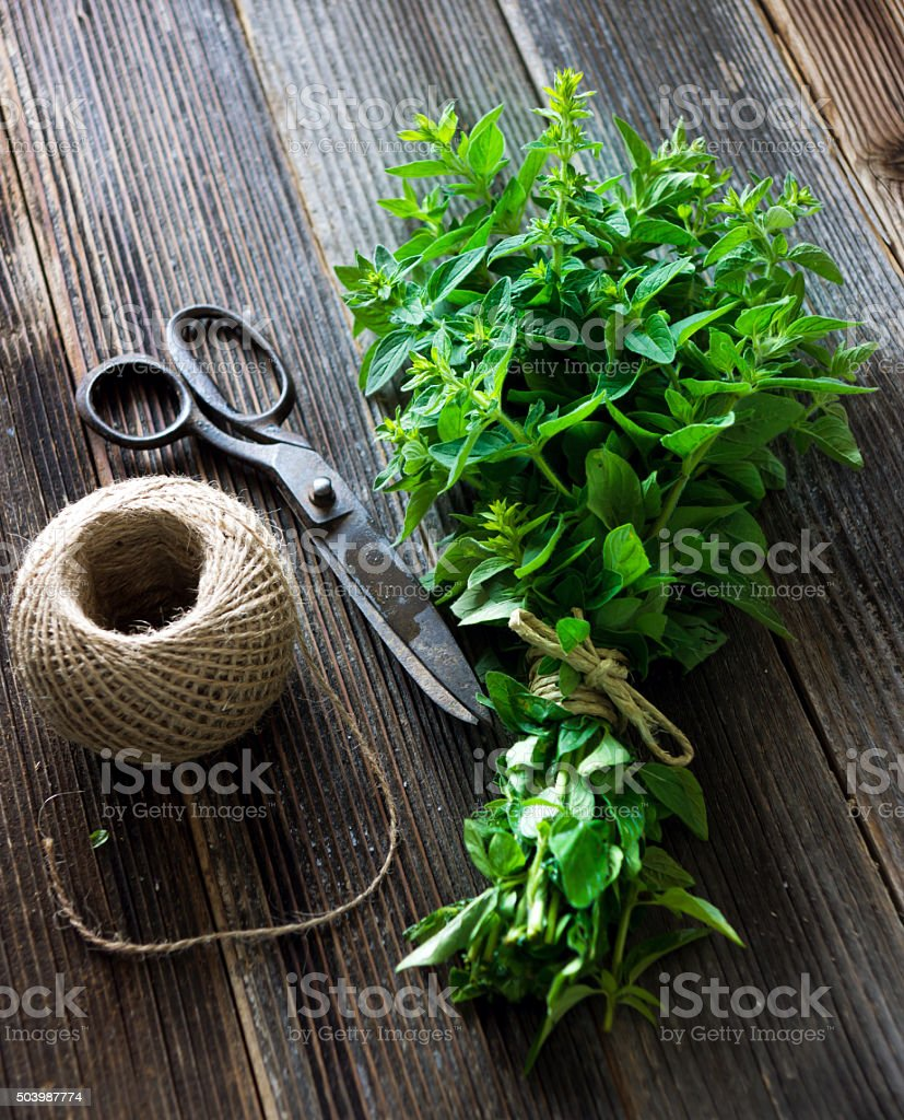 bunch of raw green herb marjoram stock photo