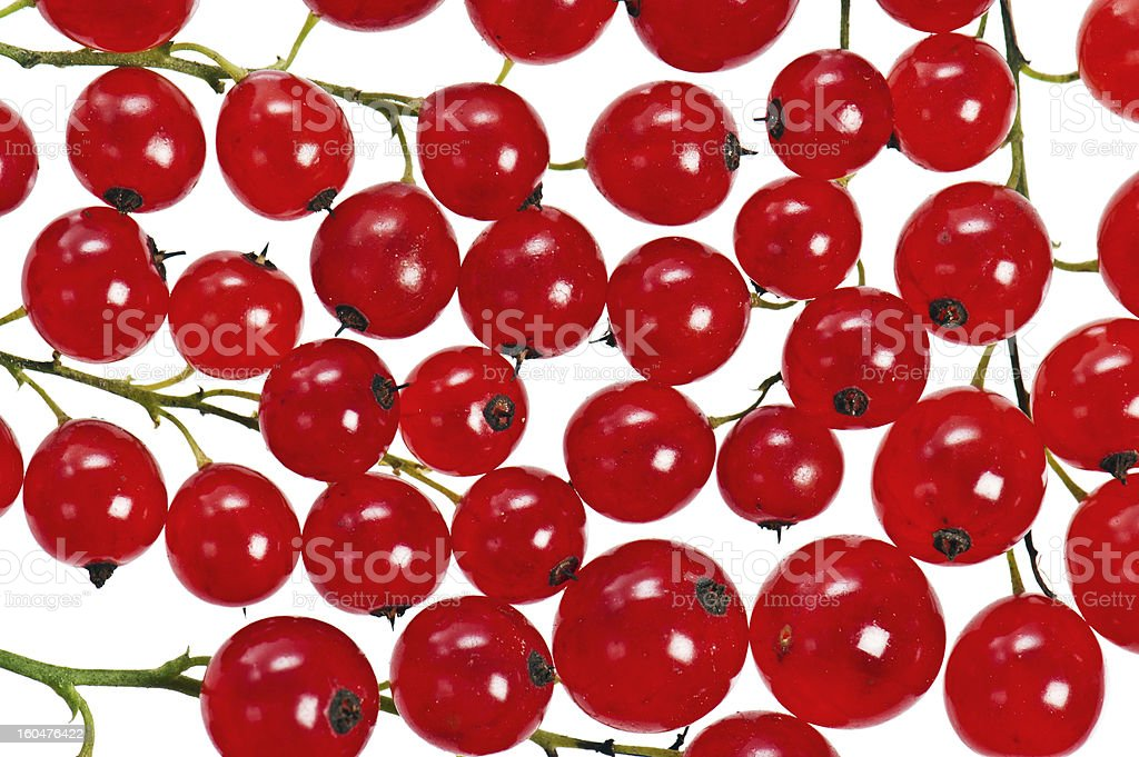 bunch of red currant, isolated on white royalty-free stock photo