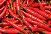 Bunch of red hot chilly pepper