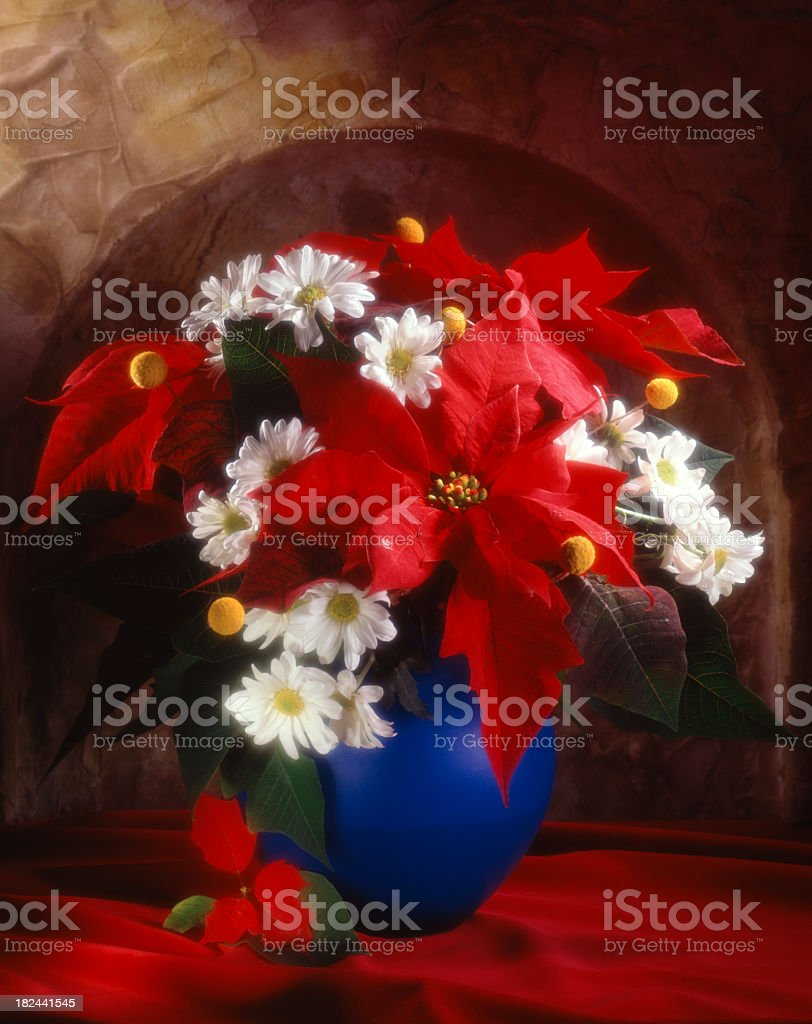 Bunch of red poinsettias royalty-free stock photo
