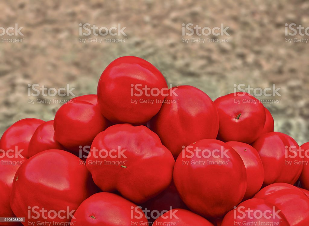 bunch of red tomatoes royalty-free stock photo
