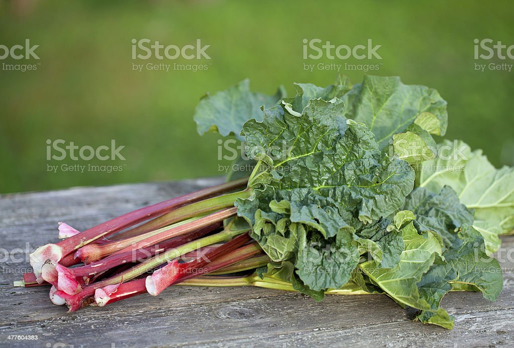 bunch of rhubarb on wooden table stock photo