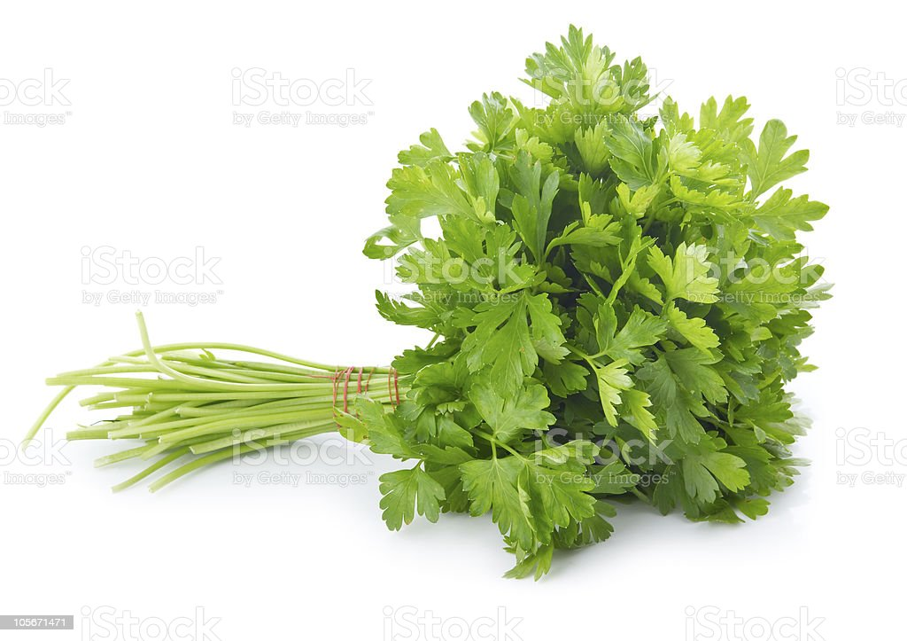 Bunch of ripe parsley isolated stock photo