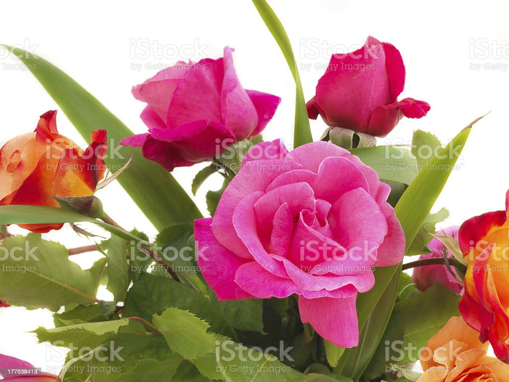 Bunch of rose flowers stock photo