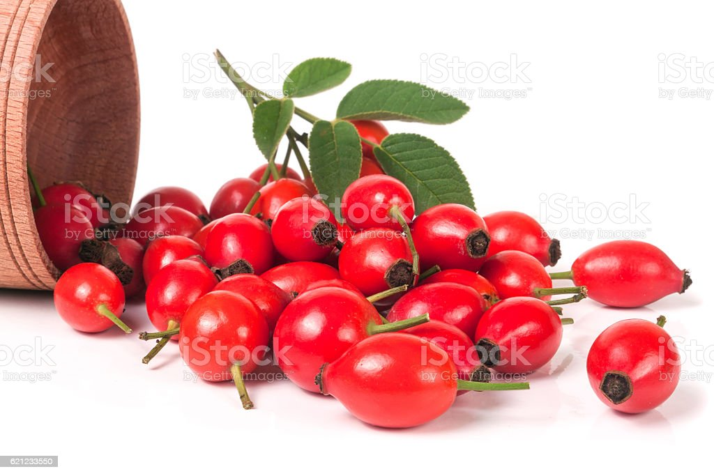 bunch of rosehip berries isolated on white background stock photo