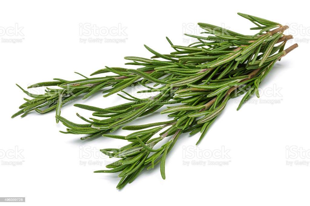Bunch of Rosemary stock photo