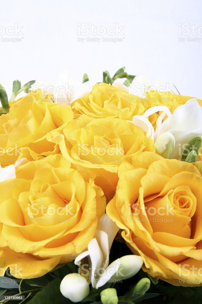 Bunch of roses (close up) royalty-free stock photo