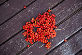 Bunch of rowan on the wooden table