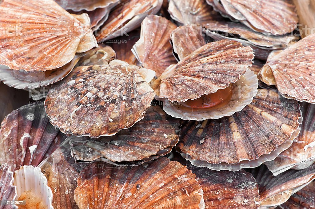A bunch of scallops for sale at a street market stock photo