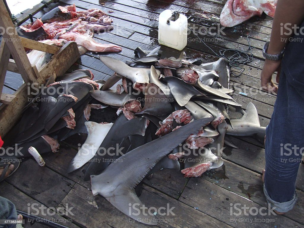 Bunch of shark fins stock photo