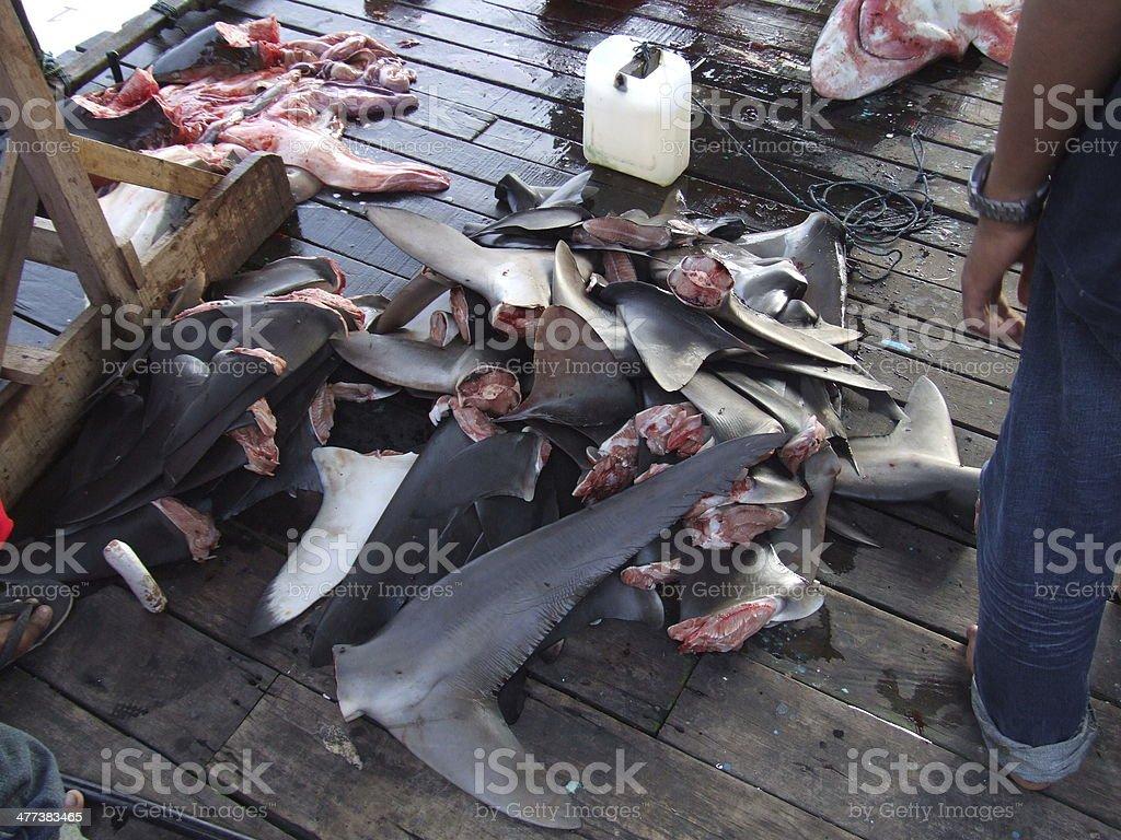 Bunch of shark fins stock photo