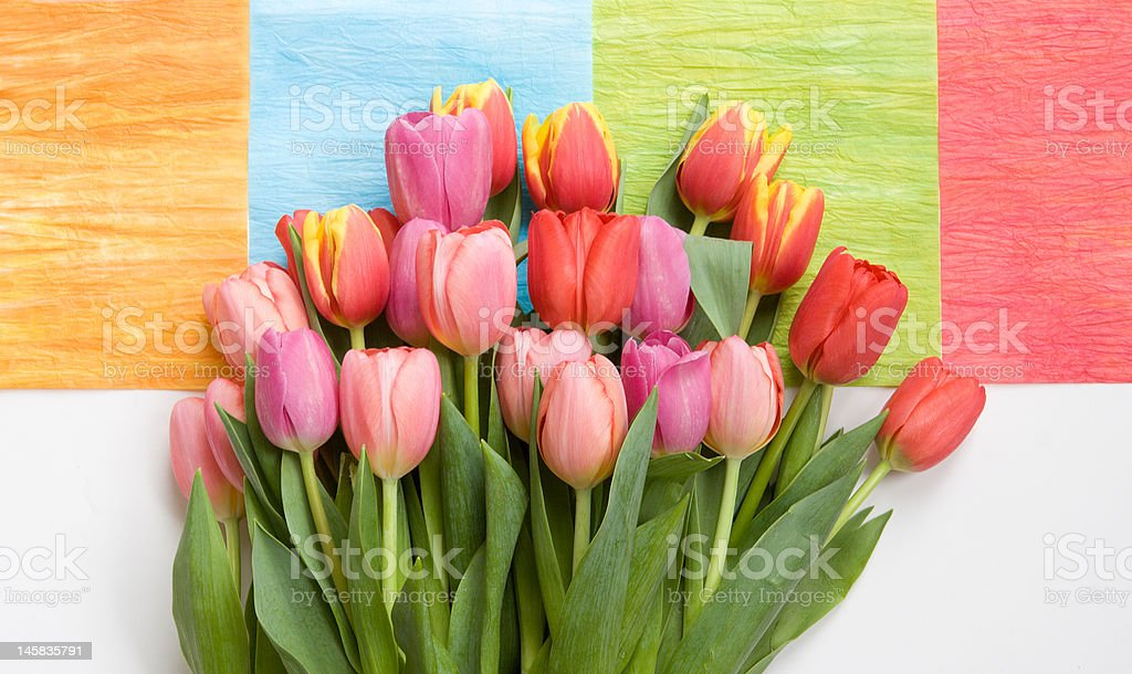 bunch of tulips on colorful background royalty-free stock photo