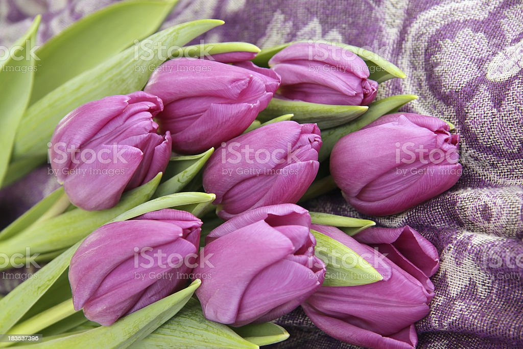 Bunch of tulips Purple flag on a scarf royalty-free stock photo