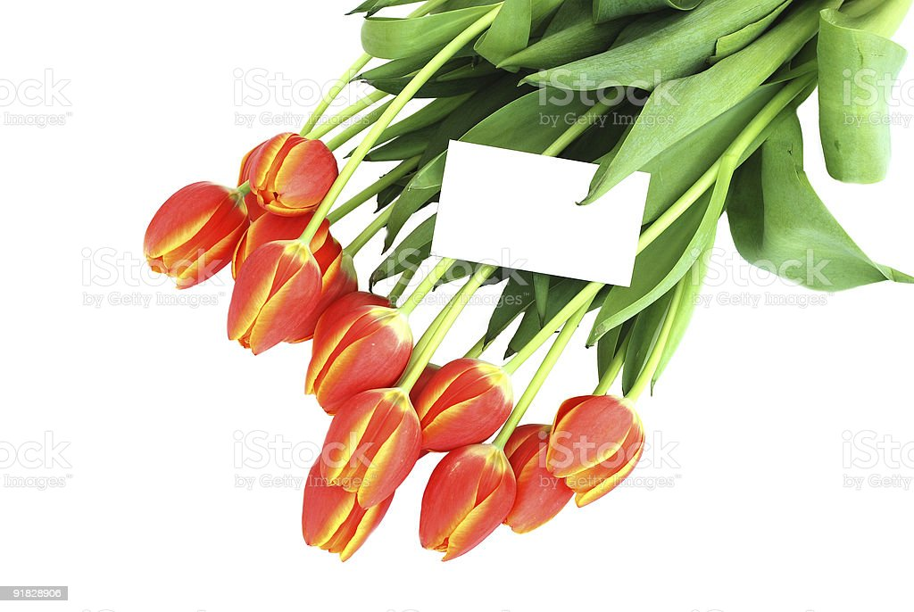 Bunch of tulips with a blank card royalty-free stock photo