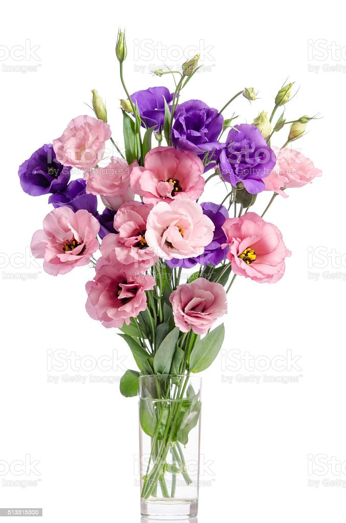 bunch of violet and pink eustoma flowers in glass vase stock photo