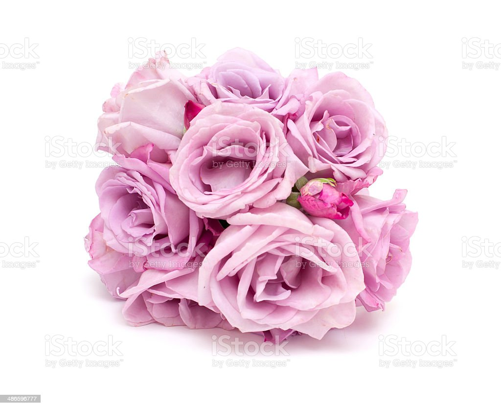 bunch of violet roses stock photo