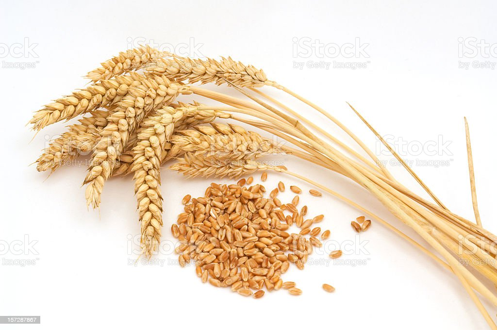 Bunch of wheat against a white background stock photo