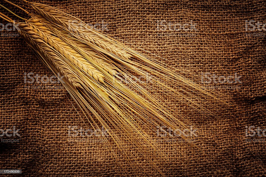 Bunch of Wheat royalty-free stock photo