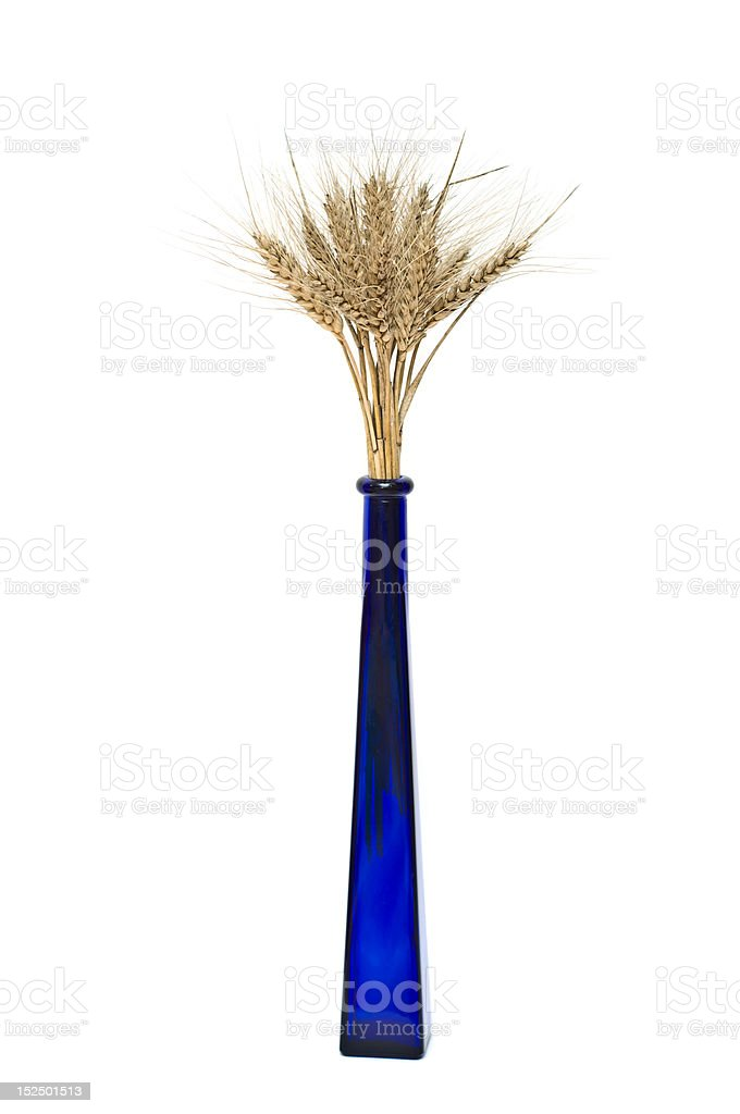 Bunch of wheat spikes in blue vase royalty-free stock photo