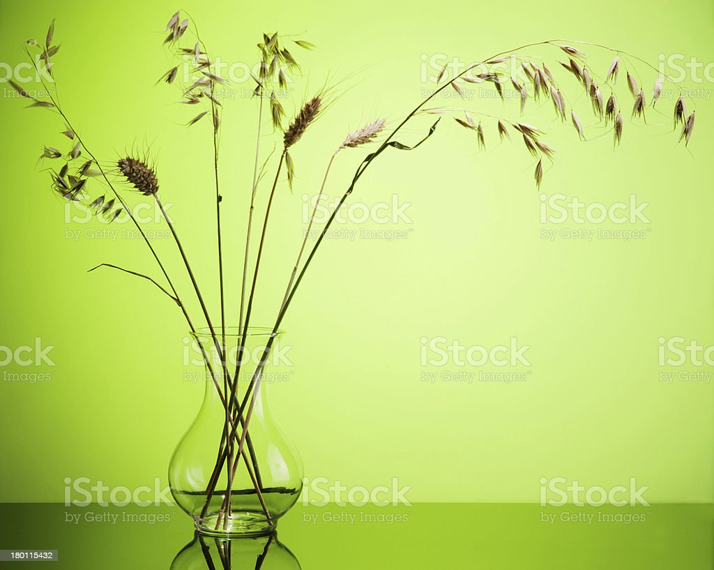 Bunch of wheat spikes in vase on green royalty-free stock photo