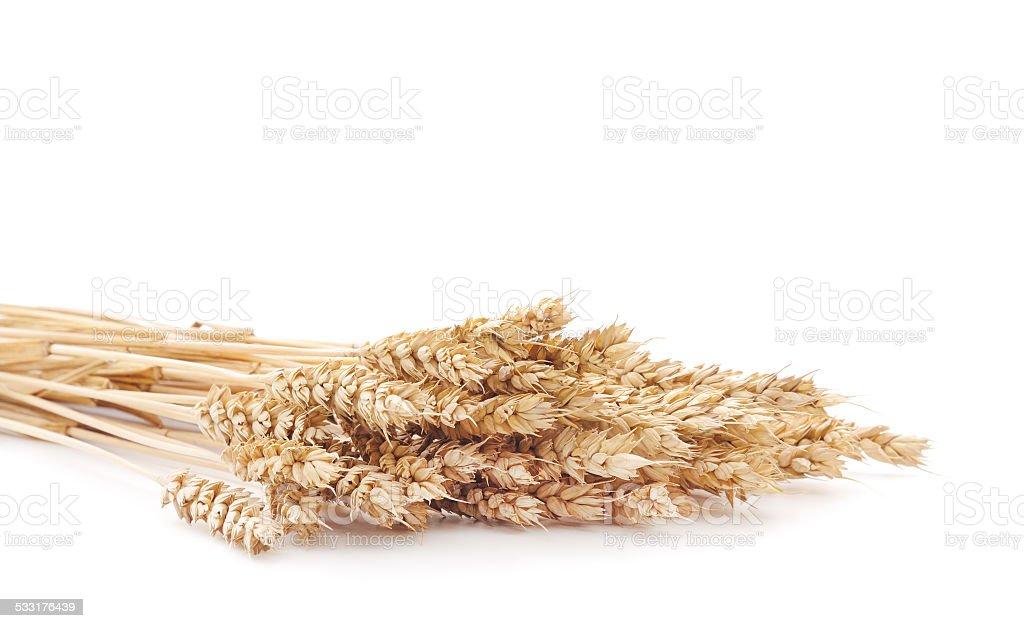 Montón de trigo pistas sobre blanco foto de stock libre de derechos