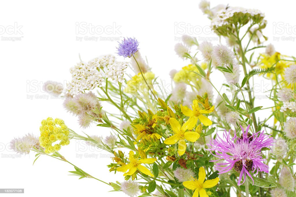 Bunch of wildflower royalty-free stock photo