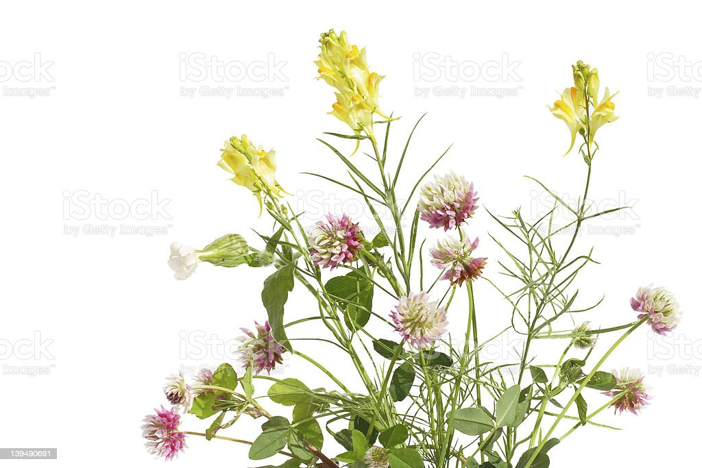 Bunch of wildflower stock photo