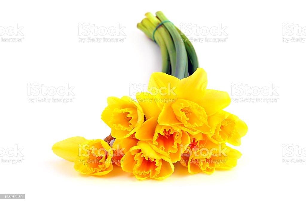bunch of yellow daffodil stock photo