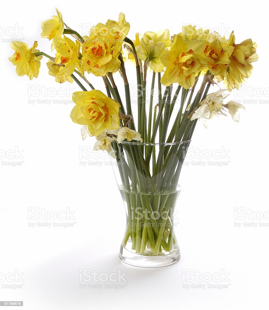 bunch of yellow flowers in glass jar, jonquil, daffodil royalty-free stock photo