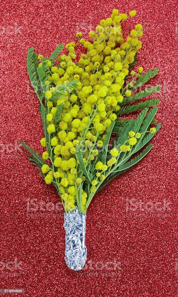 bunch of yellow Mimosas in blossom for the international women's stock photo
