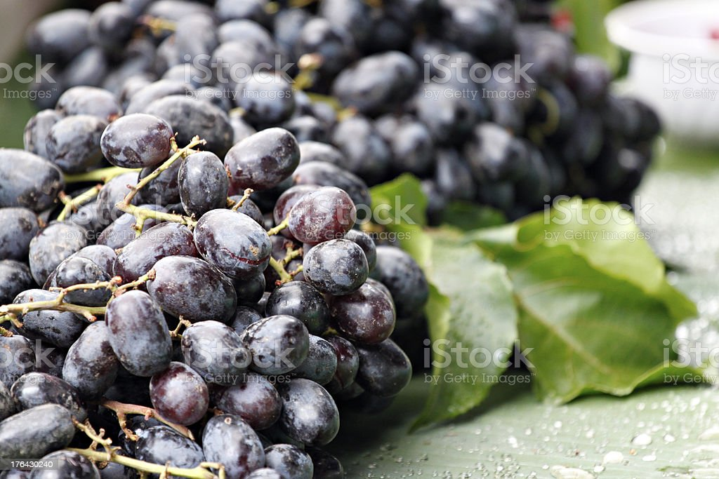 Bunches of black grapes. royalty-free stock photo