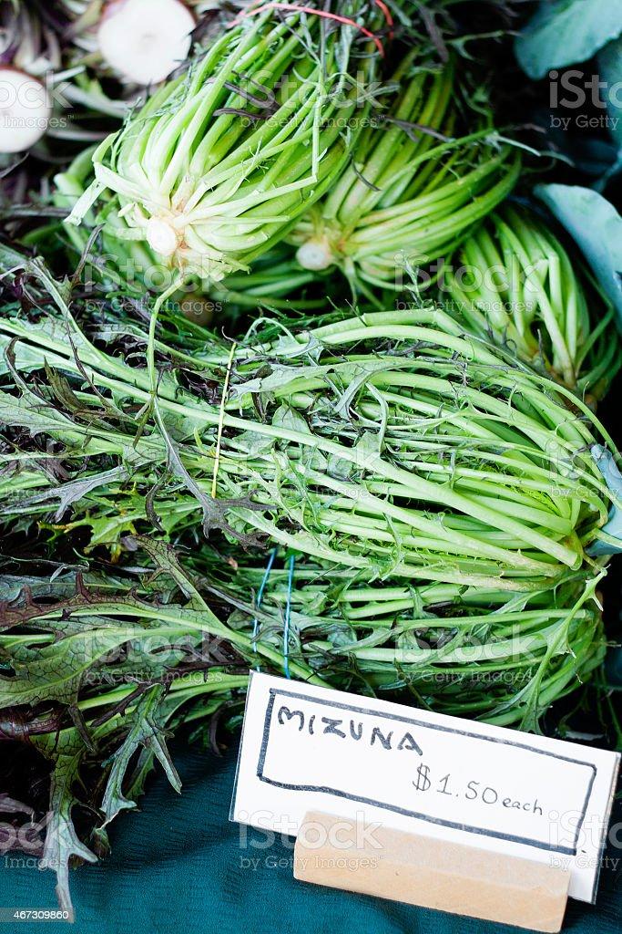 Bunches of fresh mizuna lettuce at a farmer's market stock photo