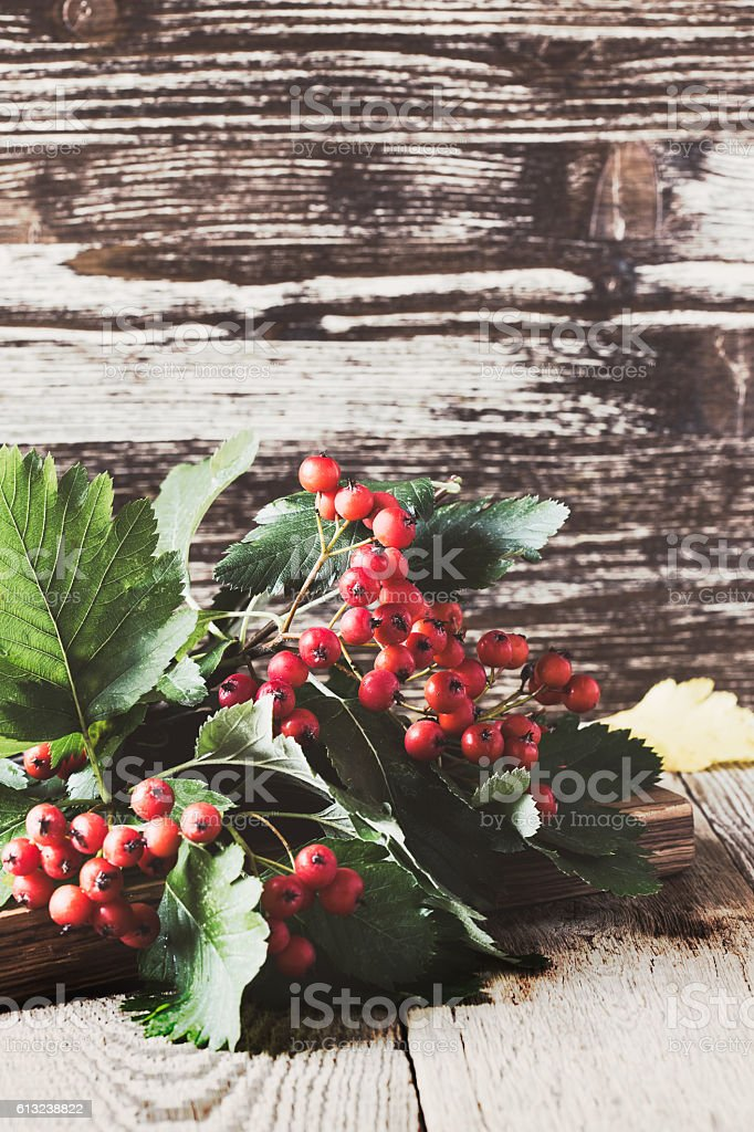 Bunches of hawthorn on  wooden table stock photo