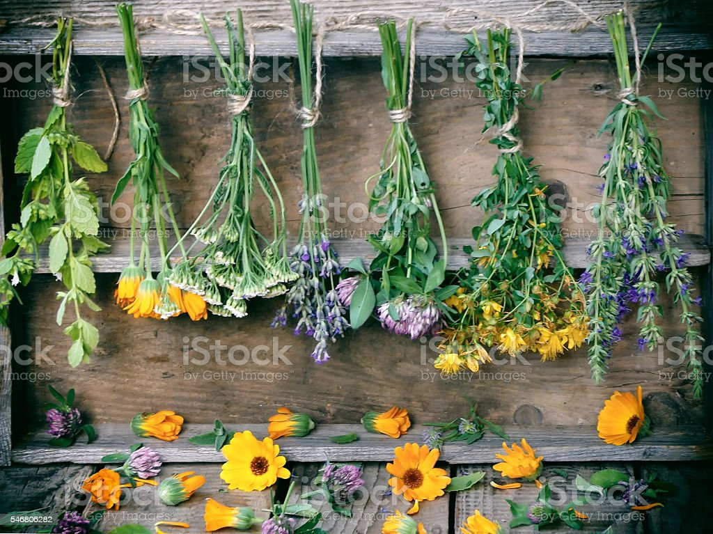 bunches of healing herbs, herbal medicine stock photo