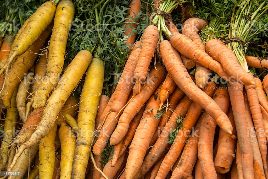 Bunches of orange and yellow carrots royalty-free stock photo