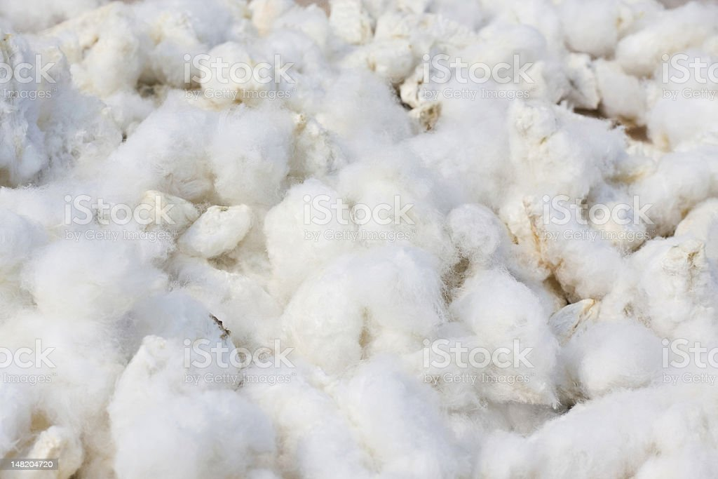 Bunches of White cotton background royalty-free stock photo