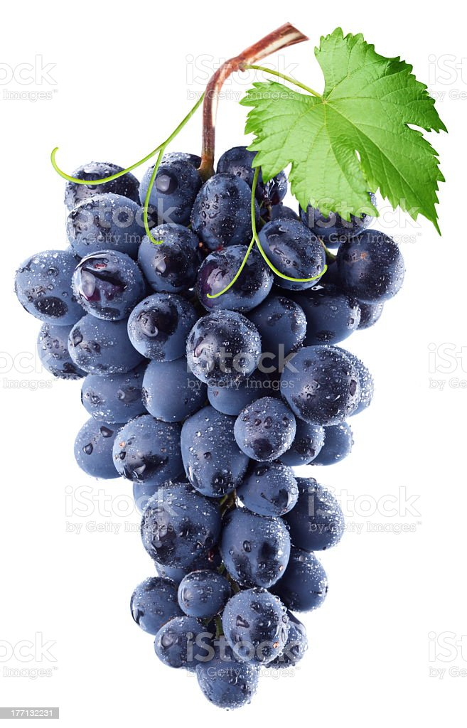 Bundle of blue grapes with a leaf against white background stock photo