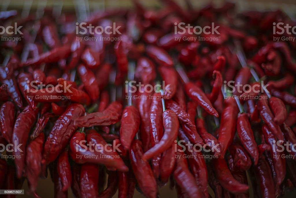 Bundle of Chili Peppers royalty-free stock photo