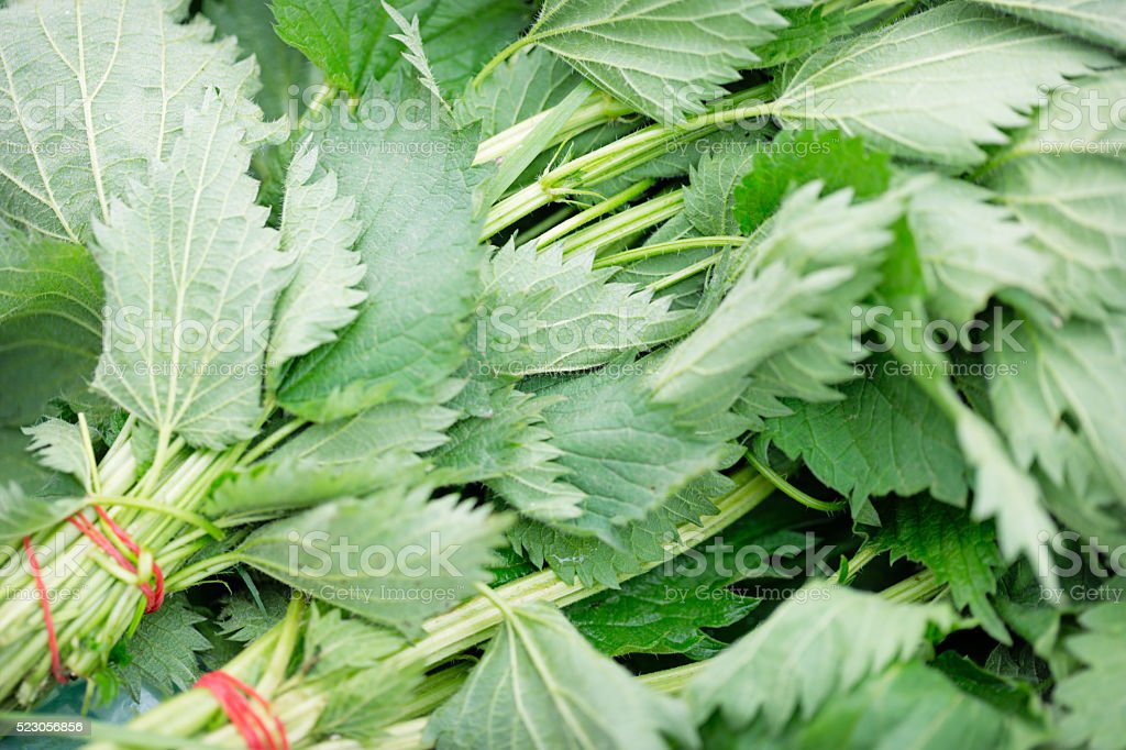 Bundle of common nettle stock photo