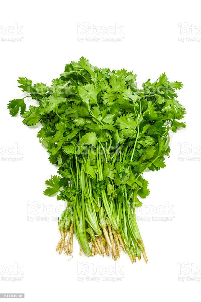 Bundle of coriander stock photo