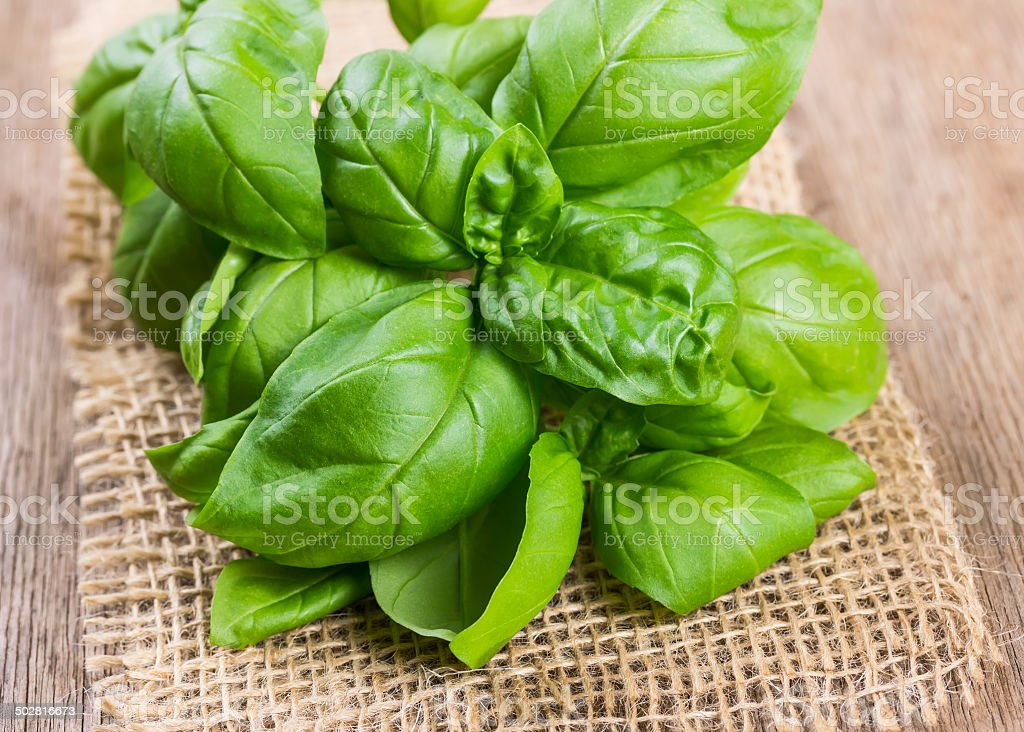 Bundle of herbs basil stock photo