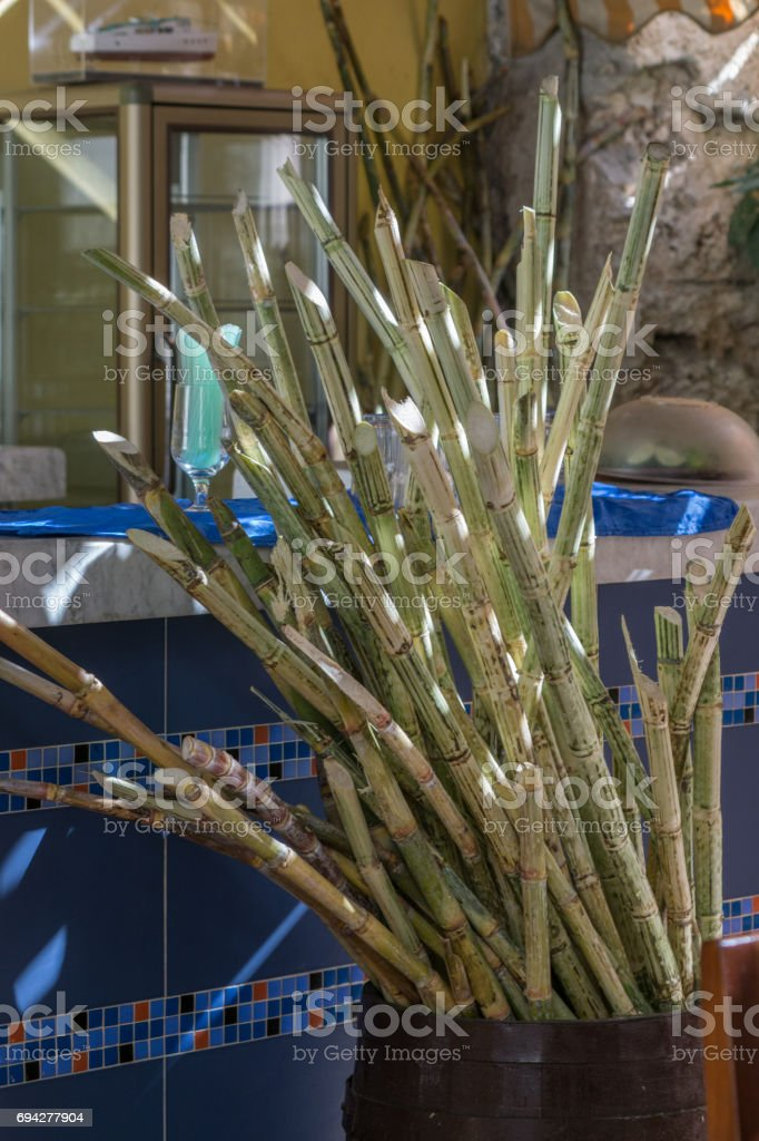 Bundle of scraped sugar cane sticks in a bucket stock photo