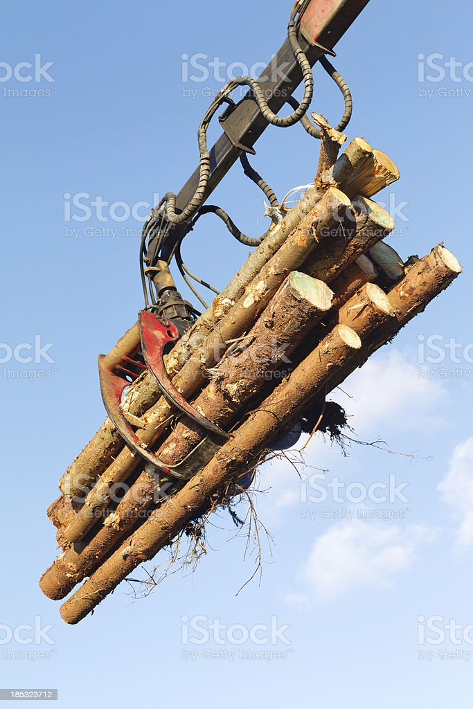 Bundle of tree logs in a crane grabber royalty-free stock photo