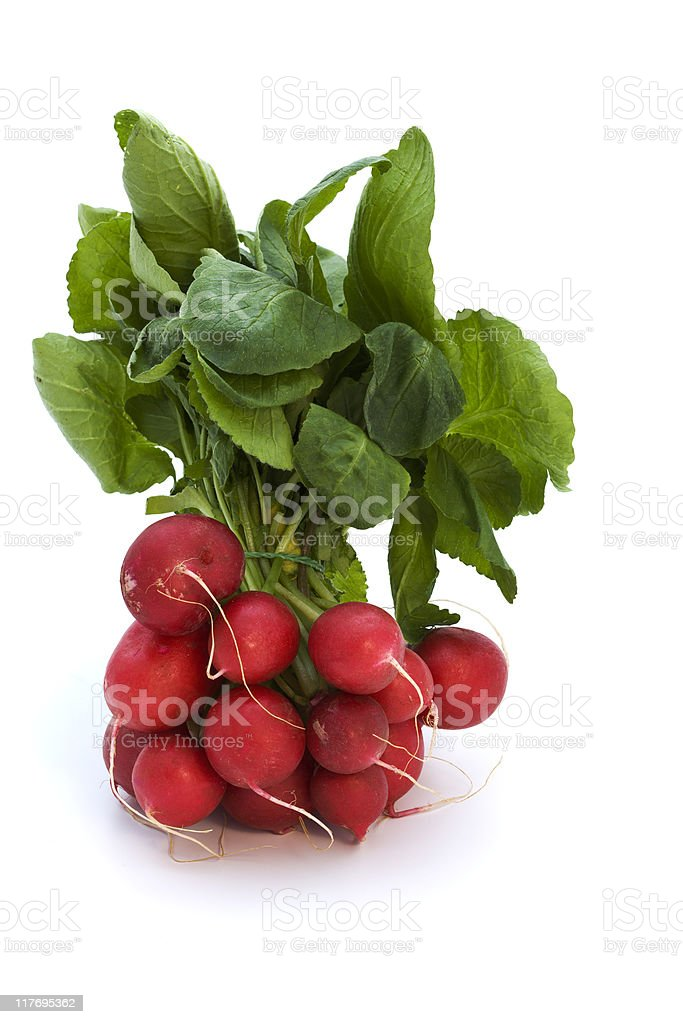 bundled radishes isolated royalty-free stock photo