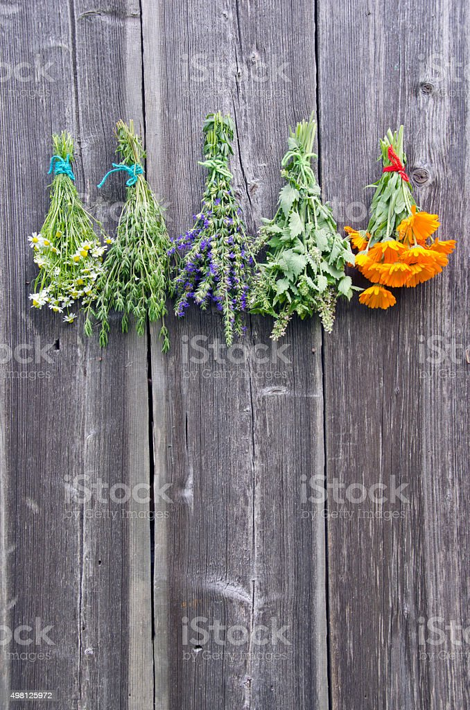Bundles  medical tied herbs hanging on the wooden wall stock photo
