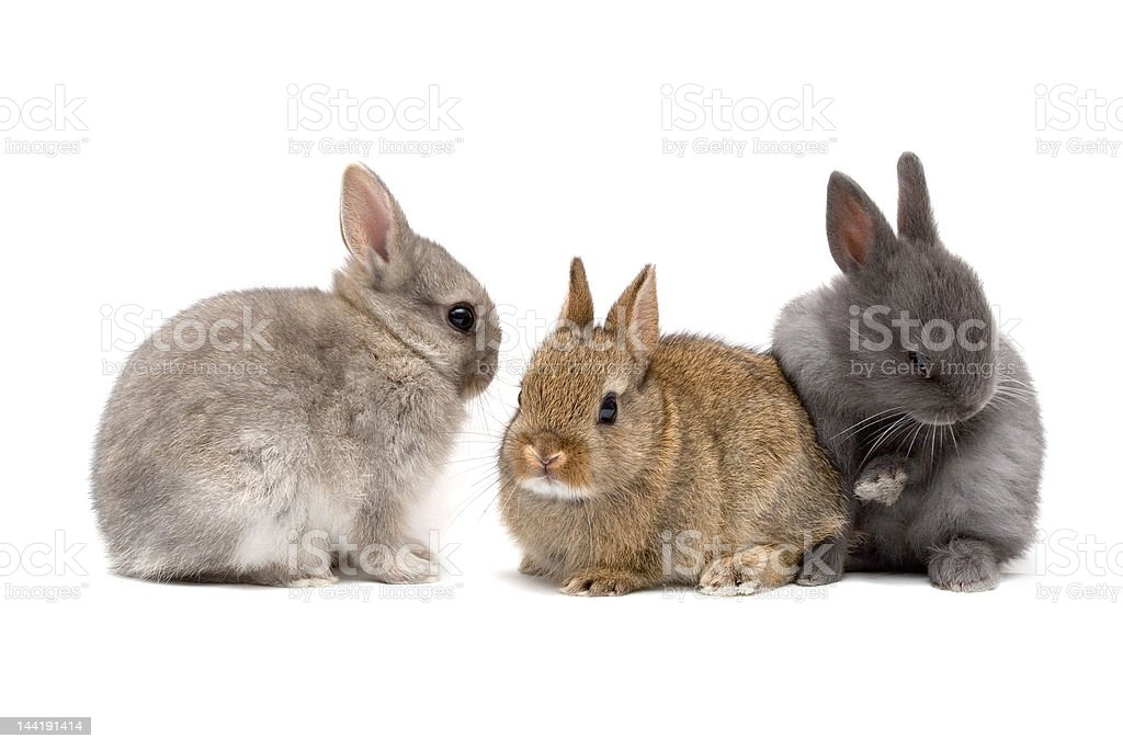 Bunnies 02 stock photo