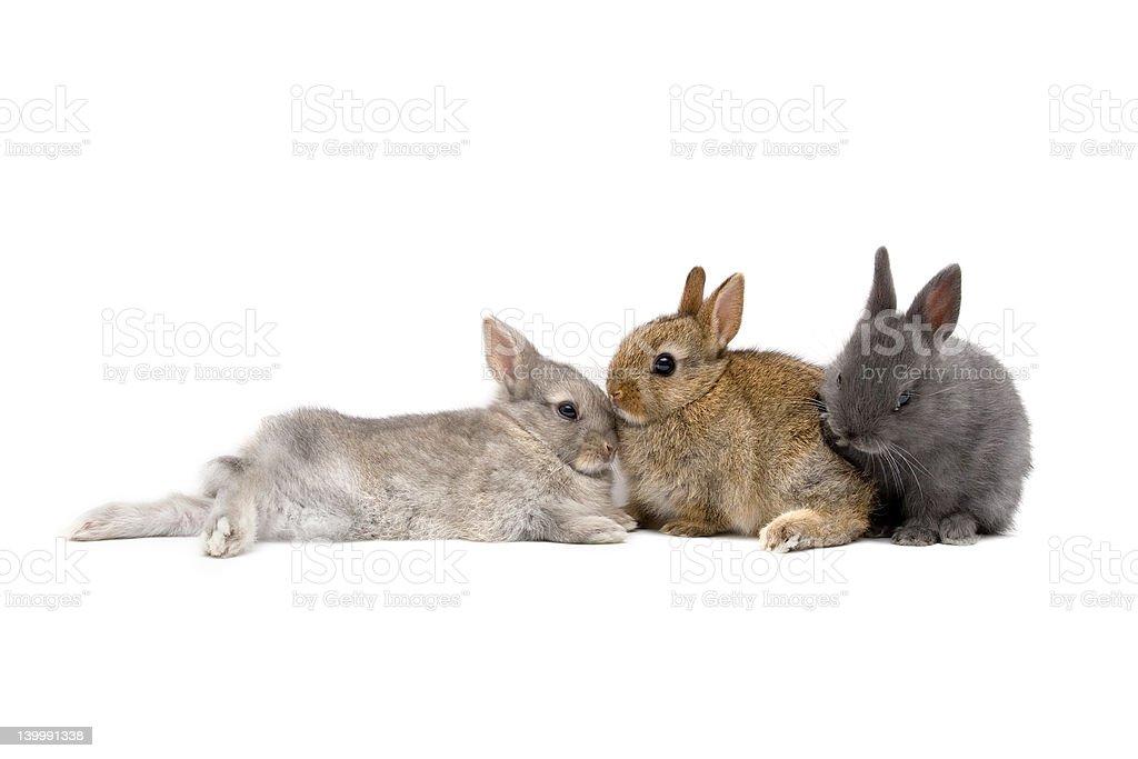 Bunnies 03 stock photo