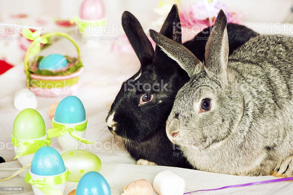 Bunnies and Easter eggs royalty-free stock photo