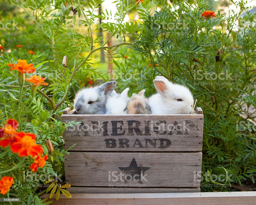 Bunnies of Spring stock photo