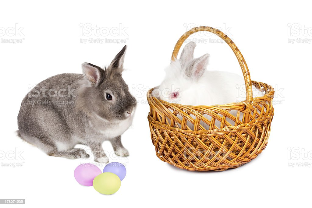 Bunnies with Easter eggs royalty-free stock photo